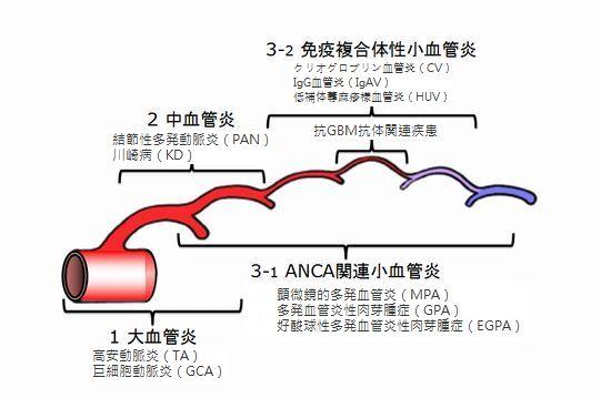 肺炎 ウイルス 動脈 冠状